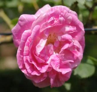 Venez vous ressourcer dans les jardins du château d'Ainay le Vieil