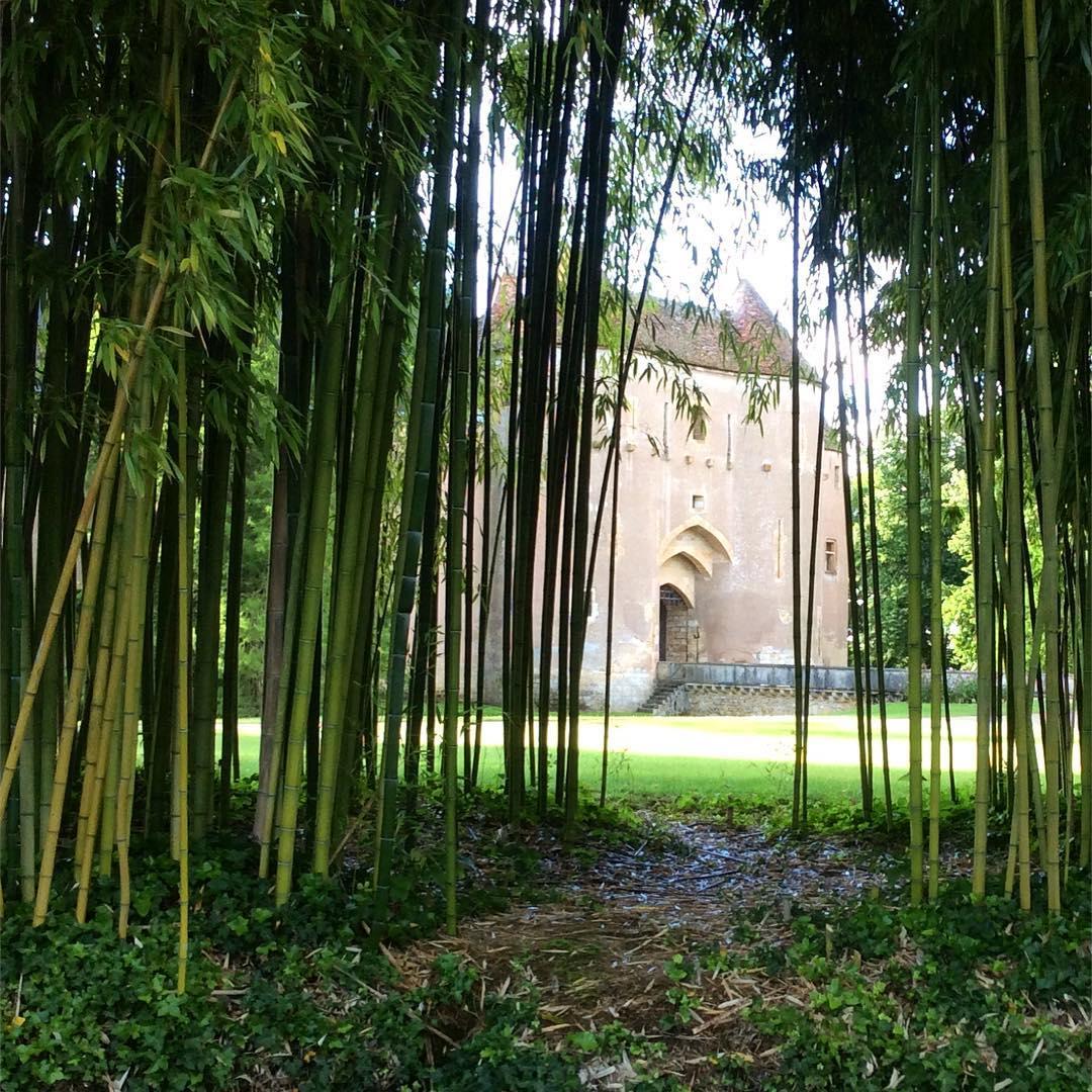 bambou été