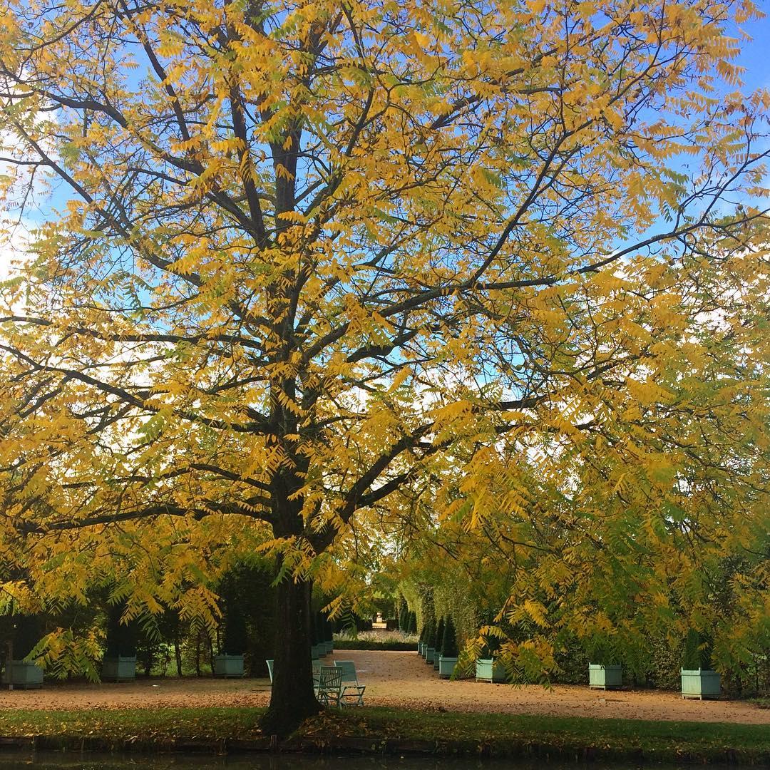 noyer automne