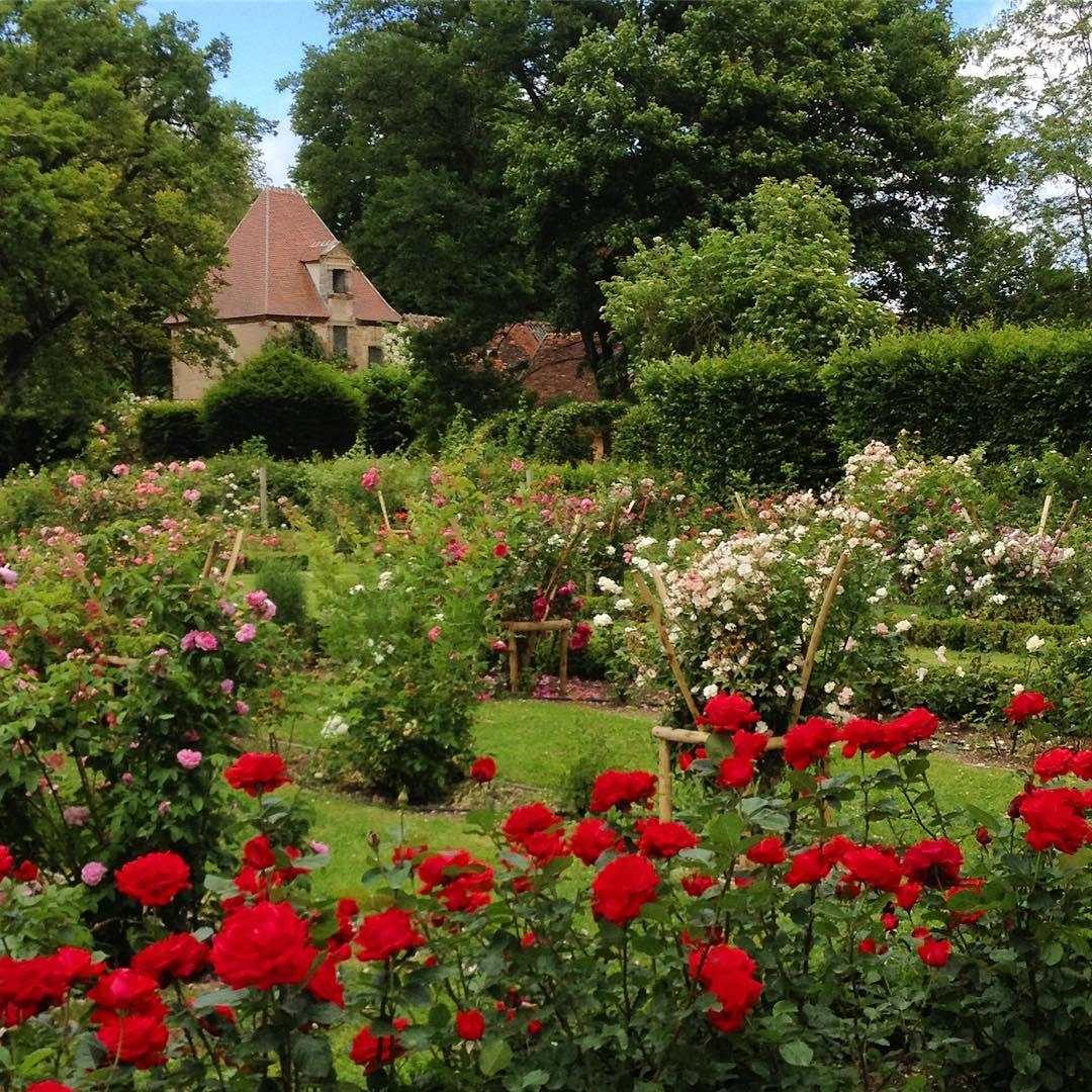 roseraie printemps